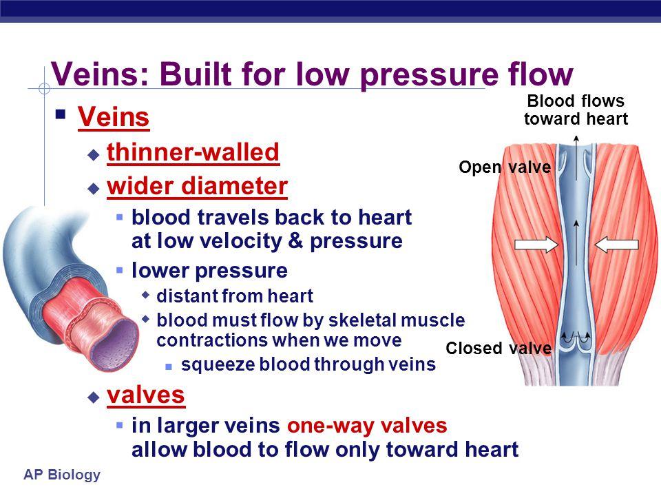 AP Biology Arteries: Built for high pressure pump  Arteries  thicker walls  provide strength for high pressure pumping of blood  narrower diameter