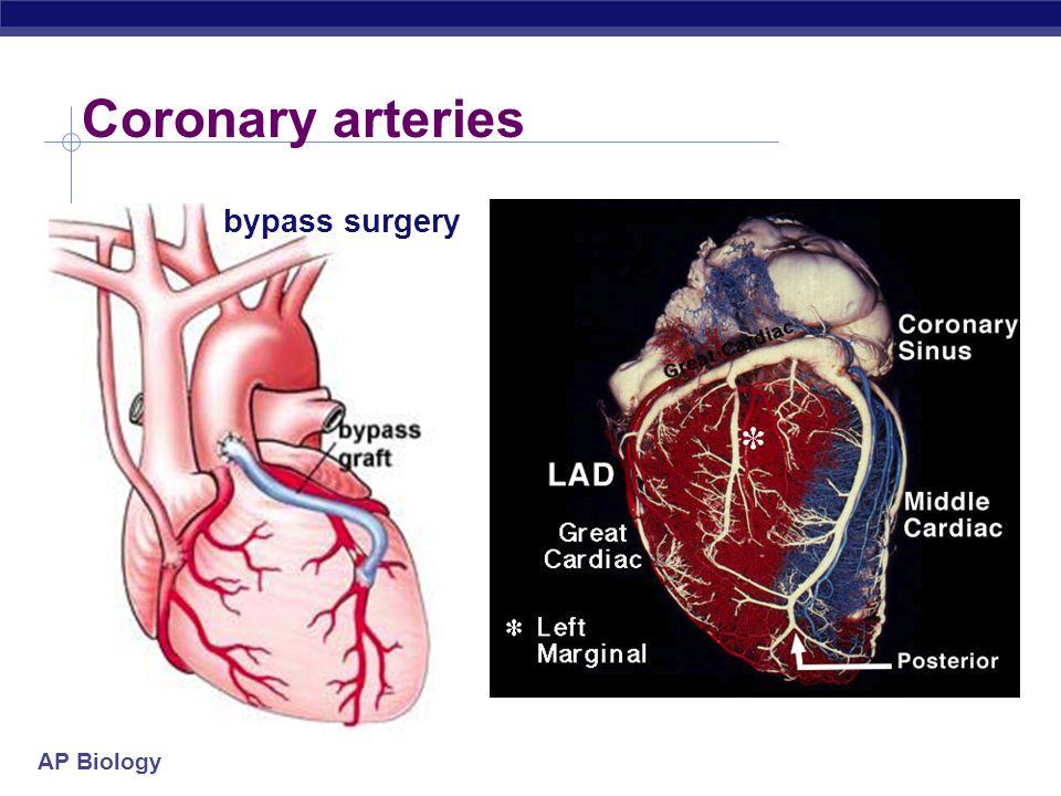 AP Biology Mammalian heart Coronary arteries to neck & head & arms