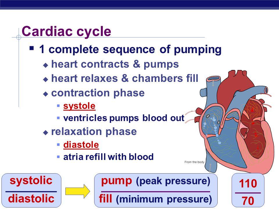 "AP Biology AV SL AV Lub-dub, lub-dub  Heart sounds  closing of valves  ""Lub""  recoil of blood against closed AV valves  ""Dub""  recoil of blood a"