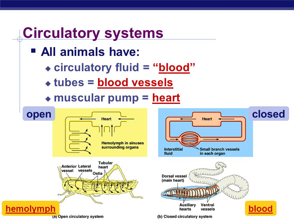 AP Biology In circulation…  What needs to be transported  nutrients & fuels  from digestive system  respiratory gases  O 2 & CO 2 from & to gas e