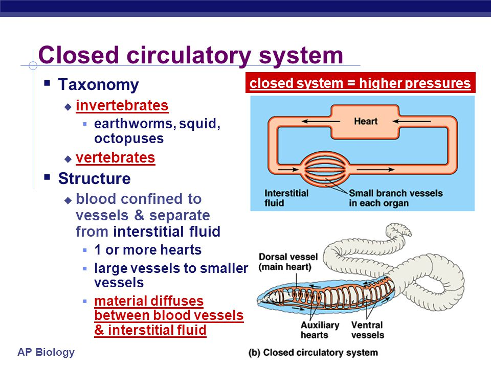 AP Biology Closed circulatory system  Taxonomy  invertebrates  earthworms, squid, octopuses  vertebrates  Structure  blood confined to vessels & separate from interstitial fluid  1 or more hearts  large vessels to smaller vessels  material diffuses between blood vessels & interstitial fluid closed system = higher pressures