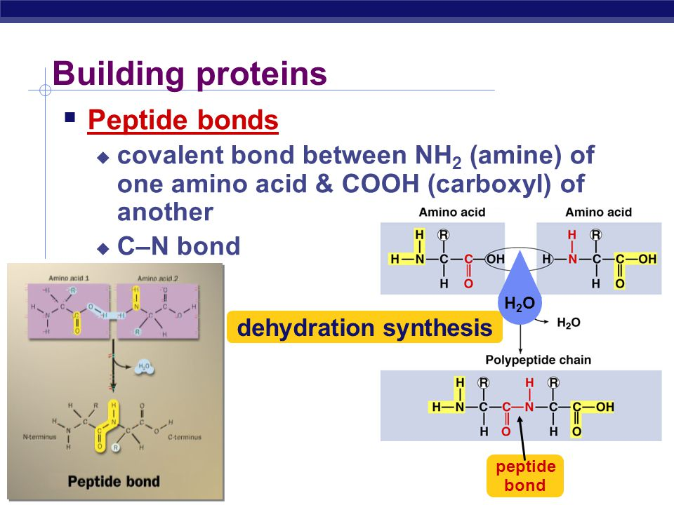 AP Biology Sulfur containing amino acids  Form disulfide bridges  covalent cross links betweens sulfhydryls  stabilizes 3-D structure You wondered