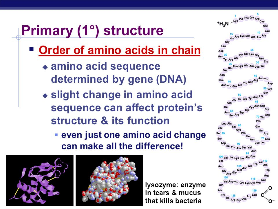 AP Biology Protein structure & function hemoglobin  Function depends on structure  3-D structure  twisted, folded, coiled into unique shape collagen pepsin