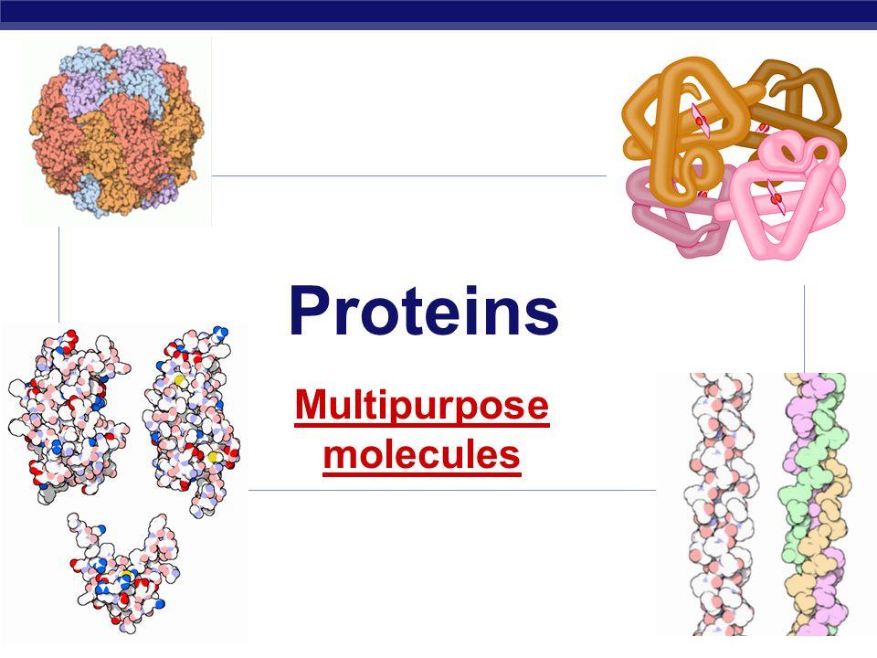 AP Biology Proteins