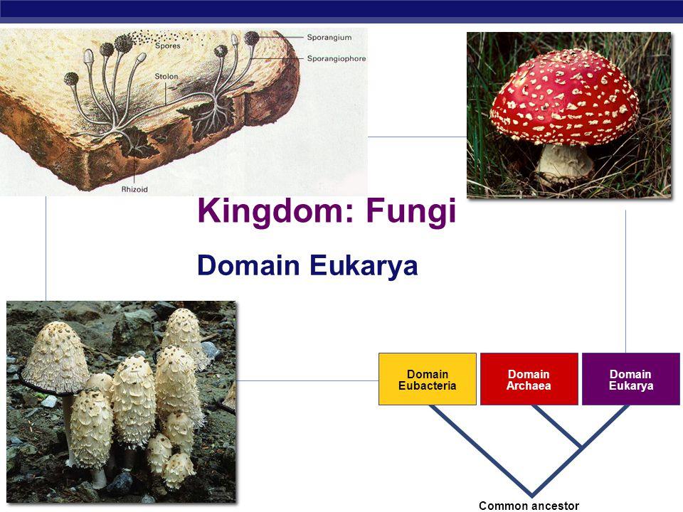 AP Biology 2007-2008 Domain Eubacteria Domain Archaea Domain Eukarya Common ancestor Kingdom: Fungi Domain Eukarya