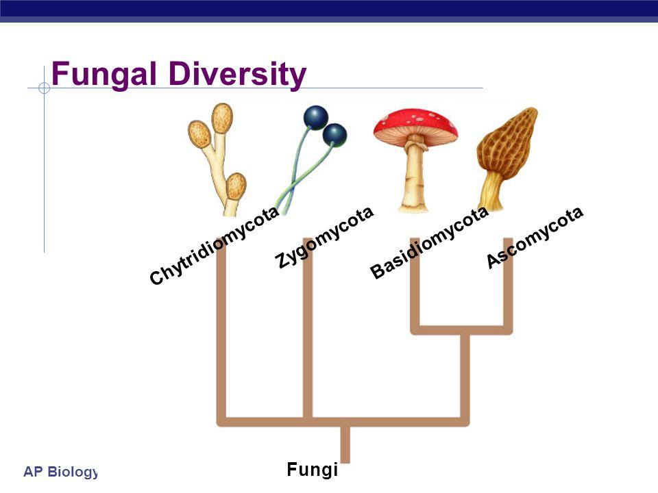 AP Biology Fungal Diversity Chytridiomycota Zygomycota Basidiomycota Ascomycota Fungi