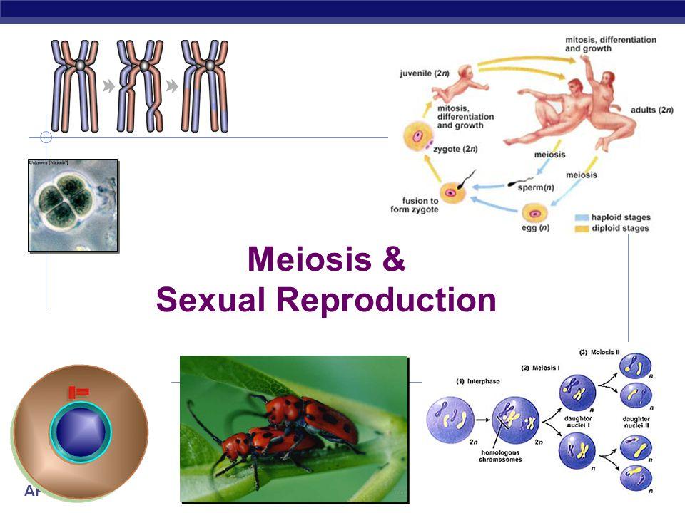 AP Biology 2007-2008 Meiosis & Sexual Reproduction