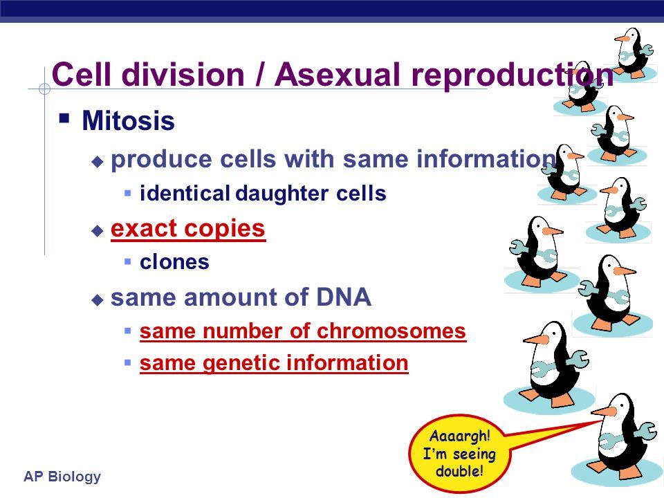 AP Biology Overview of meiosis I.P.M.A.T.P.M.A.T interphase 1prophase 1metaphase 1anaphase 1 telophase 1 prophase 2 metaphase 2anaphase 2telophase 2 2n = 4 n = 2