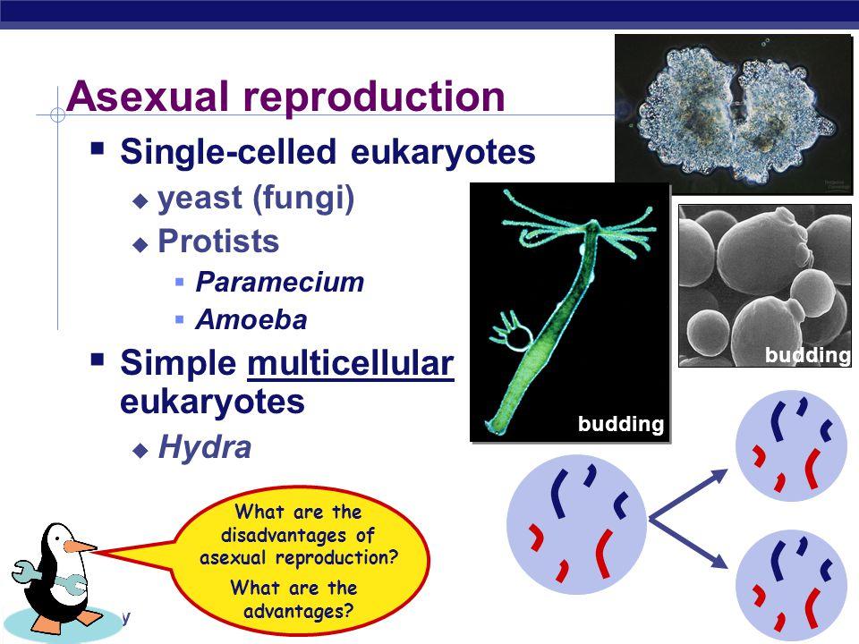 AP Biology mitosis zygote Putting it all together… 23 46 egg sperm 46 meiosis 46 23 fertilization development meiosis  fertilization  mitosis + development 46 gametes