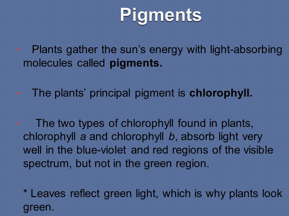 Plants gather the sun's energy with light-absorbing molecules called pigments. The plants' principal pigment is chlorophyll. The two types of chloroph
