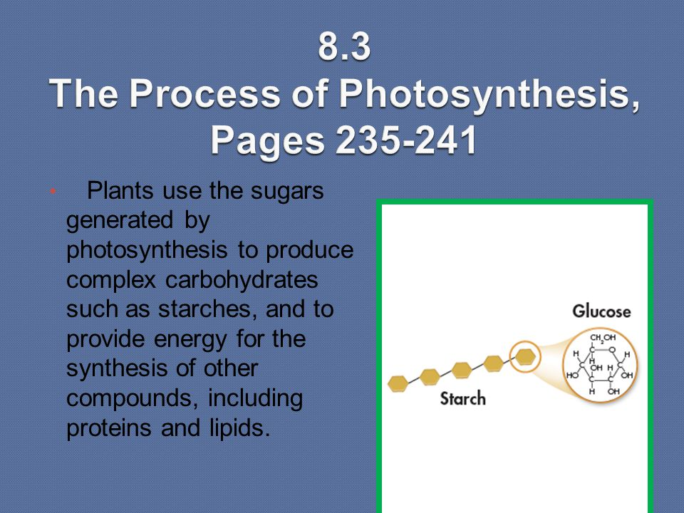 Plants use the sugars generated by photosynthesis to produce complex carbohydrates such as starches, and to provide energy for the synthesis of other