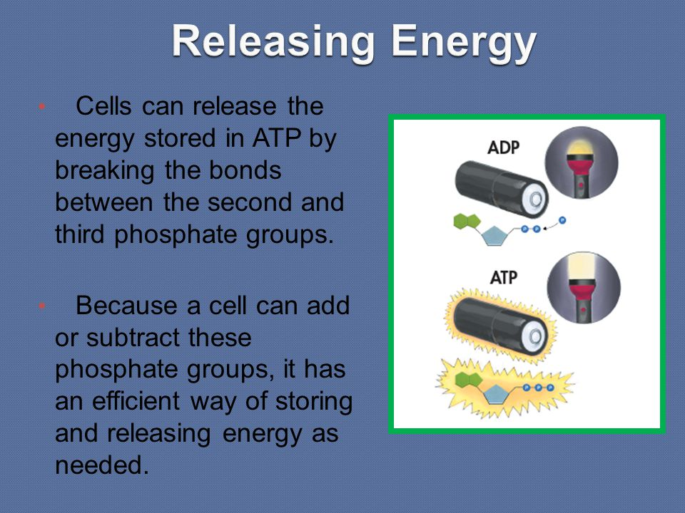 ATP is not a good molecule for storing large amounts of energy over the long term.
