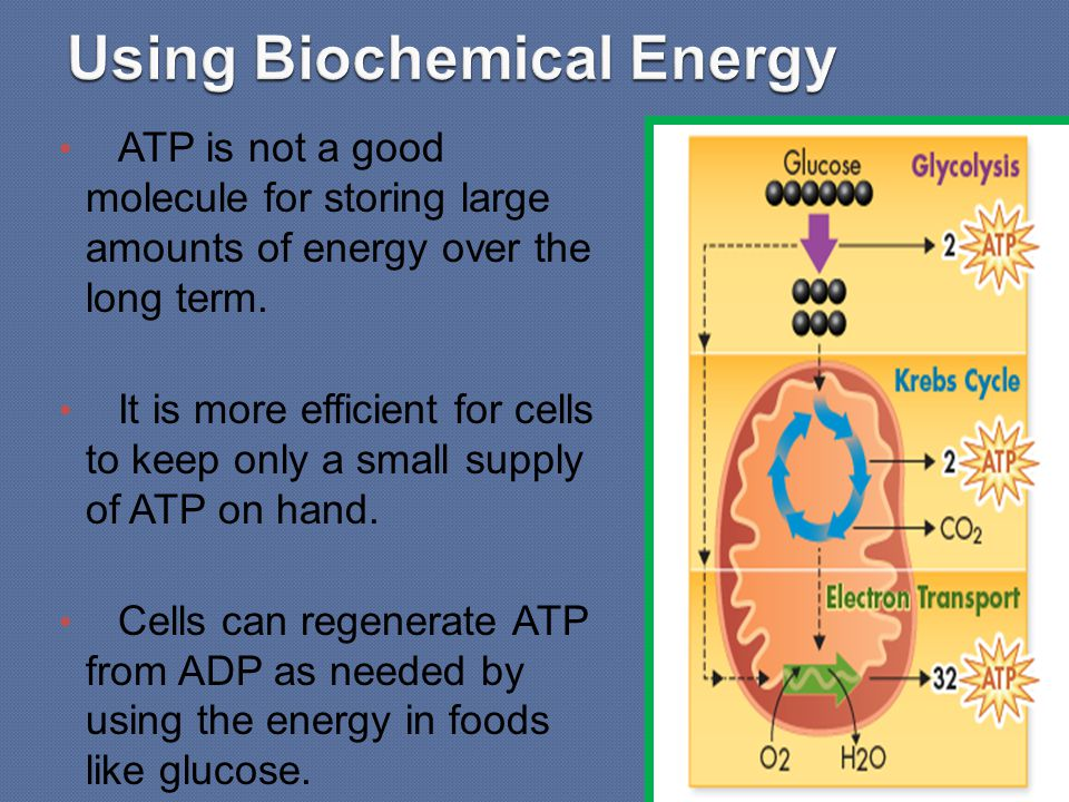 ATP is not a good molecule for storing large amounts of energy over the long term. It is more efficient for cells to keep only a small supply of ATP o