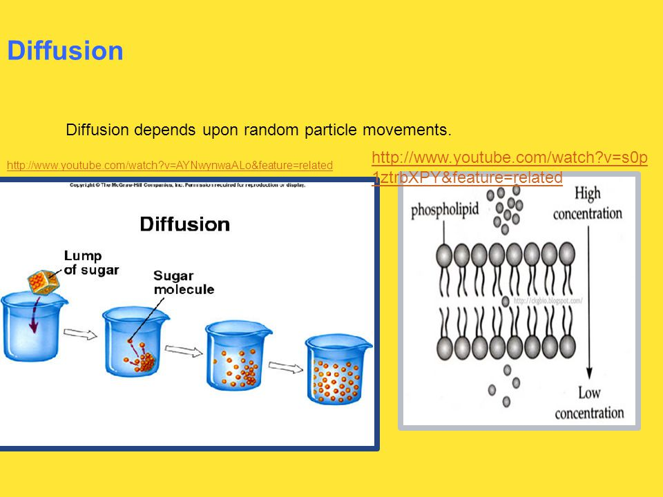 Diffusion Diffusion depends upon random particle movements. http://www.youtube.com/watch?v=AYNwynwaALo&feature=related http://www.youtube.com/watch?v=
