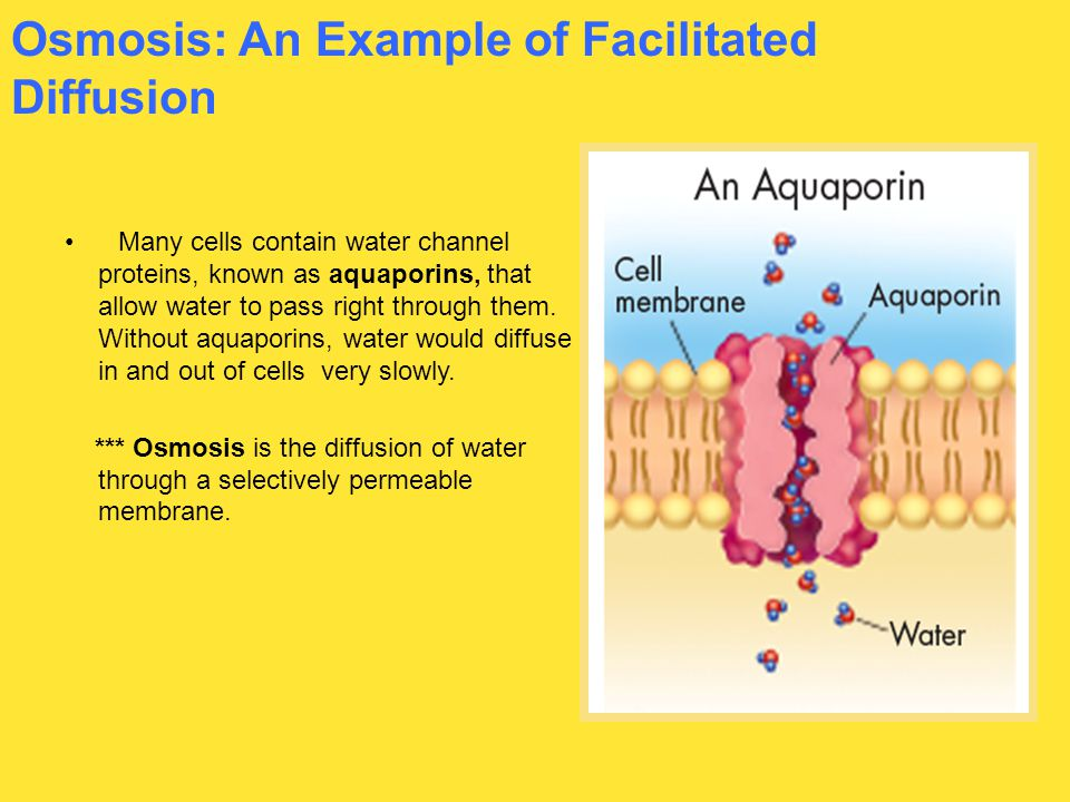 Osmosis: An Example of Facilitated Diffusion Many cells contain water channel proteins, known as aquaporins, that allow water to pass right through th