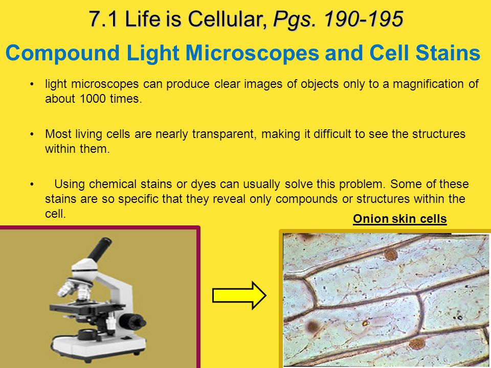 Cell Specialization The cells of multicellular organisms are specialized, with different cell types playing different roles.