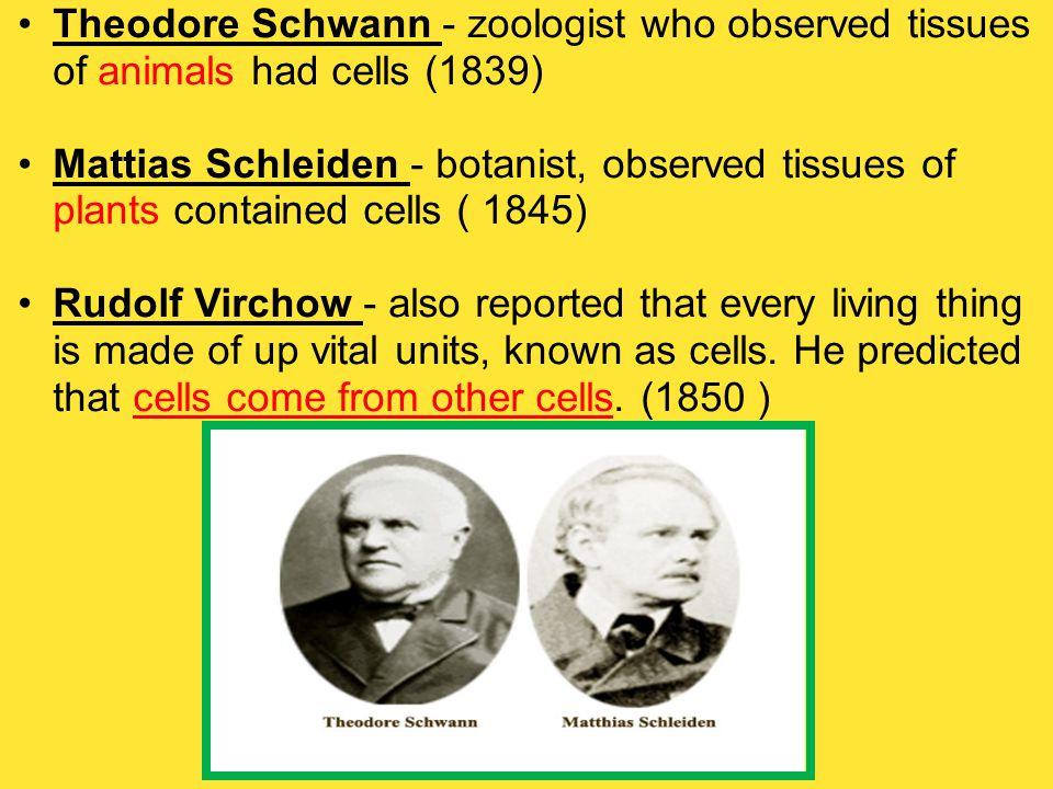 Theodore Schwann - zoologist who observed tissues of animals had cells (1839) Mattias Schleiden - botanist, observed tissues of plants contained cells