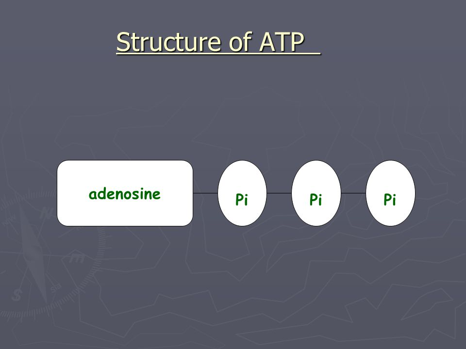 Formation of ATP ATP is made when another molecule called adenosine diphosphate (ADP) is bonded to a third inorganic phosphate (Pi) using the energy released from glucose.