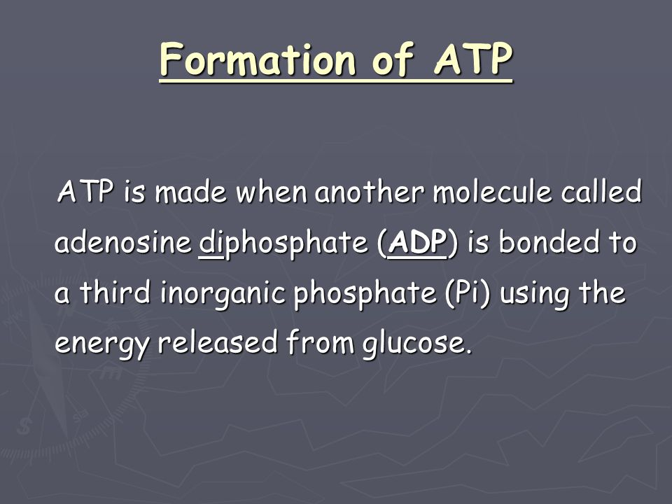 Pi adenosine Pi + adenosine Pi Enzymes Energy from respiration Energy Rich bond formed