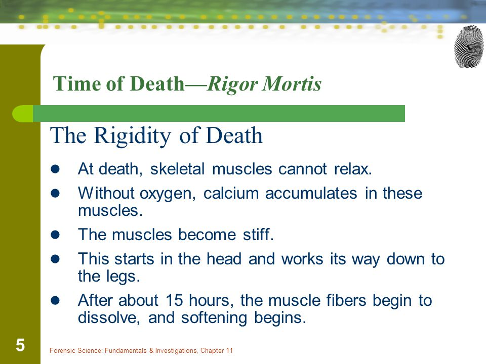 Forensic Science: Fundamentals & Investigations, Chapter 11 5 Time of Death—Rigor Mortis The Rigidity of Death At death, skeletal muscles cannot relax
