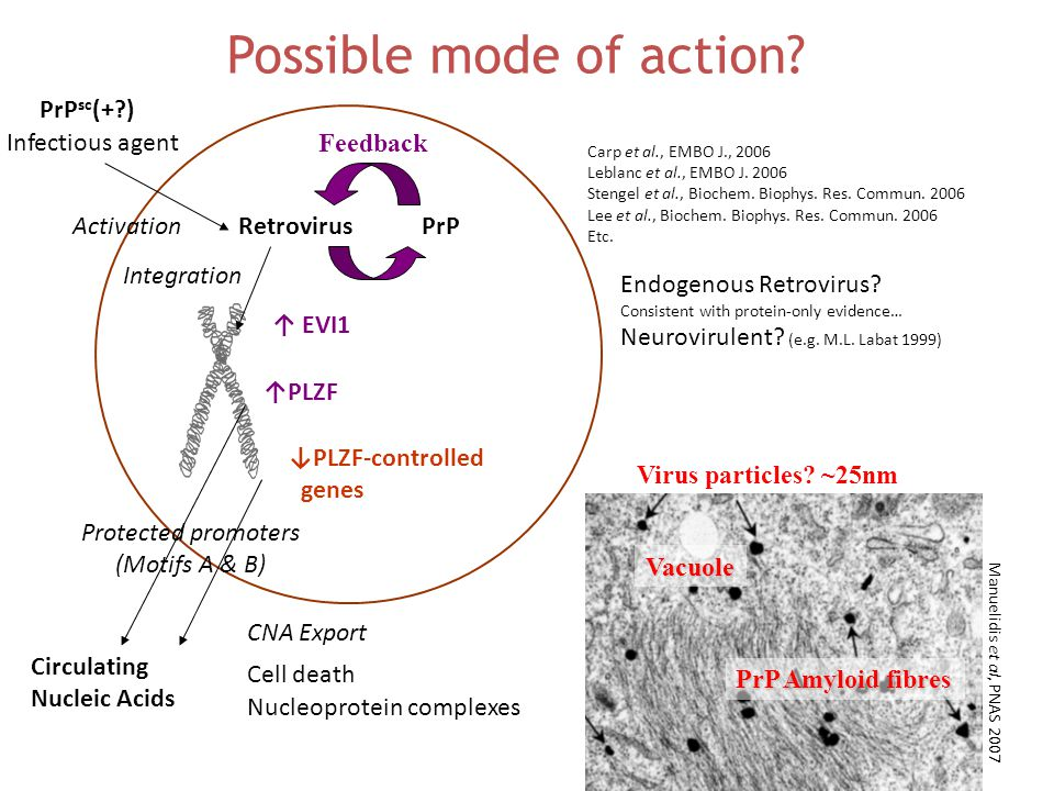 ↑ EVI1 ↑PLZF Retrovirus PrP sc (+?) ↓PLZF-controlled genes Infectious agent Circulating Nucleic Acids Endogenous Retrovirus.