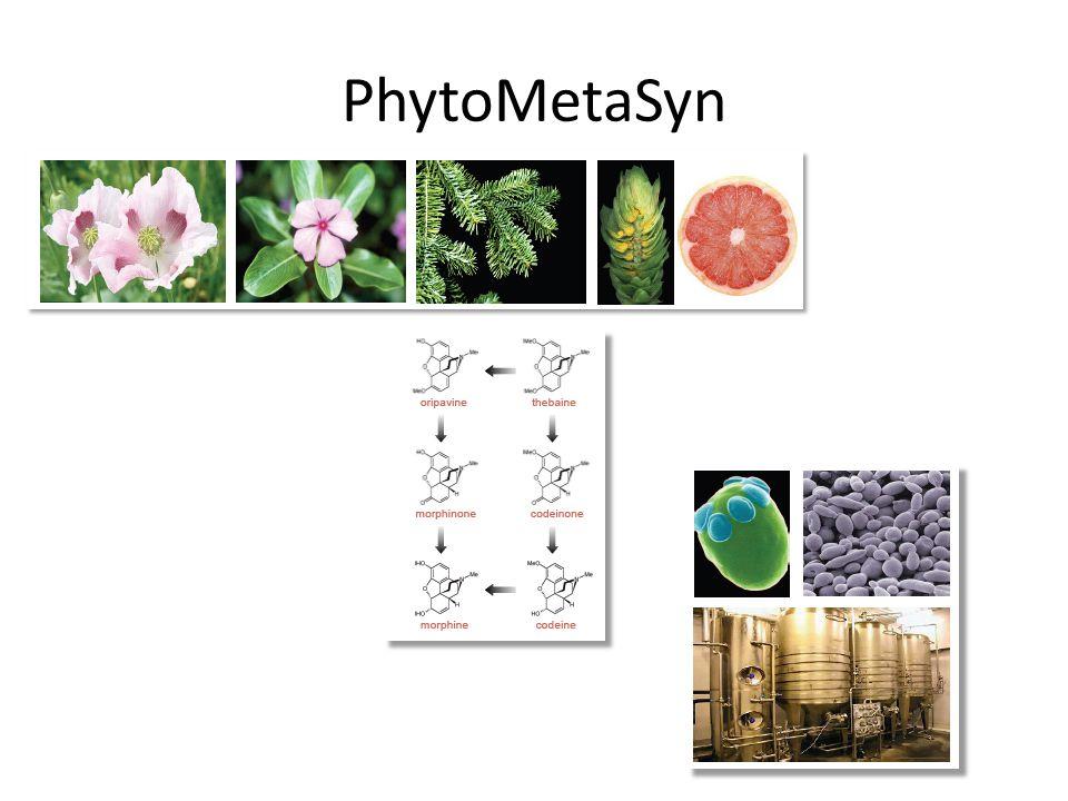 PhytoMetaSyn
