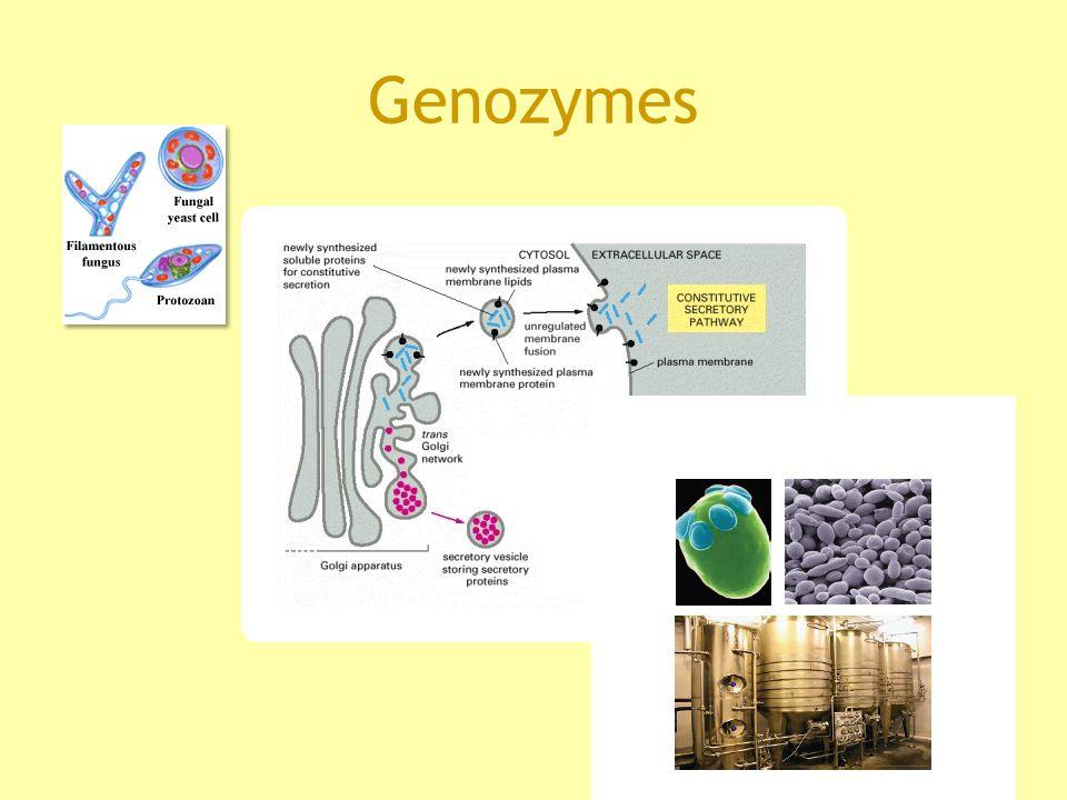 Genozymes