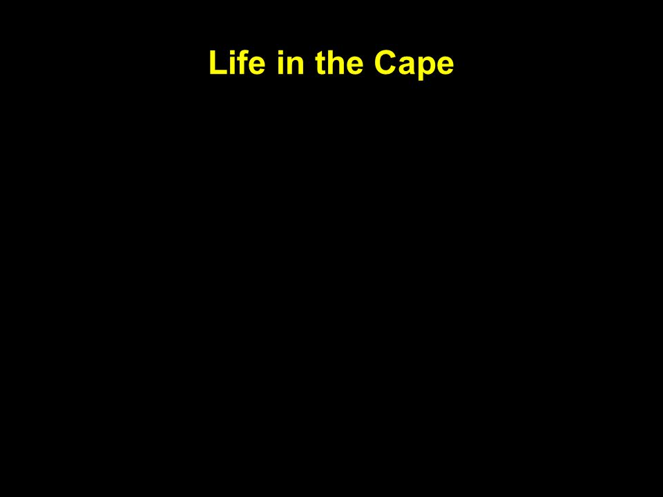 Life in the Cape