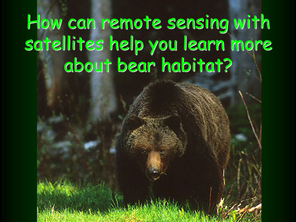 How can remote sensing with satellites help you learn more about bear habitat