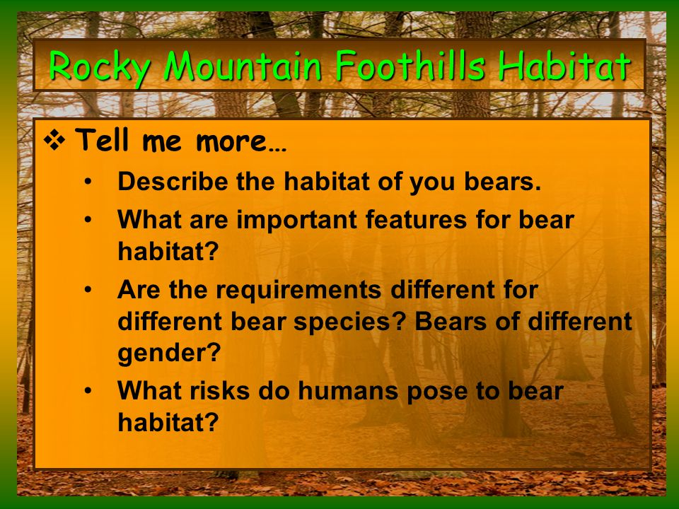 Rocky Mountain Foothills Habitat  Tell me more… Describe the habitat of you bears.