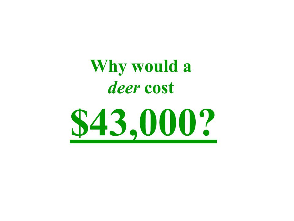 Why would a deer cost $43,000?