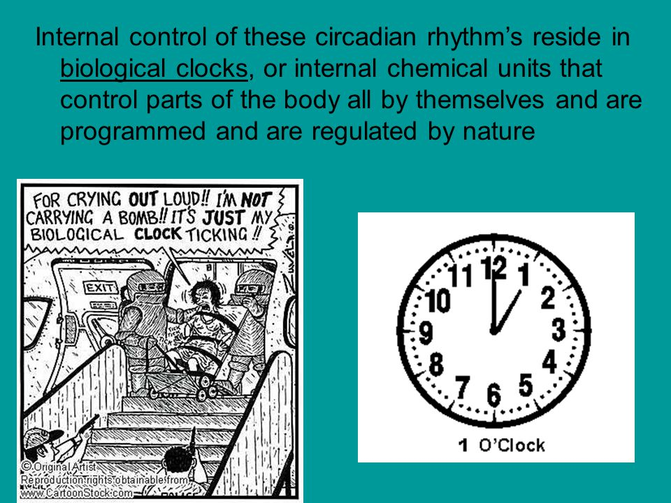 Internal control of these circadian rhythm's reside in biological clocks, or internal chemical units that control parts of the body all by themselves and are programmed and are regulated by nature