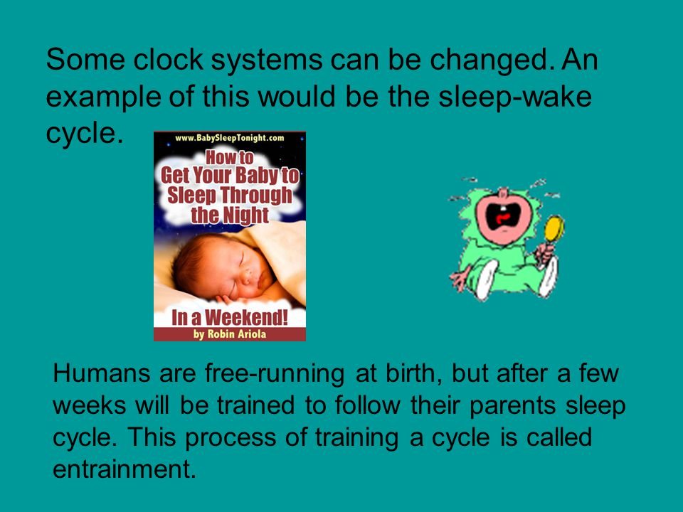Some clock systems can be changed.An example of this would be the sleep-wake cycle.