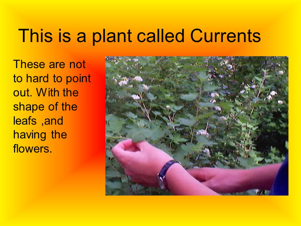 This is a plant called Currents These are not to hard to point out.