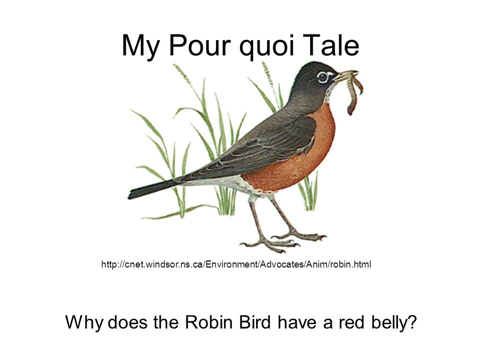 My Pour quoi Tale Why does the Robin Bird have a red belly.