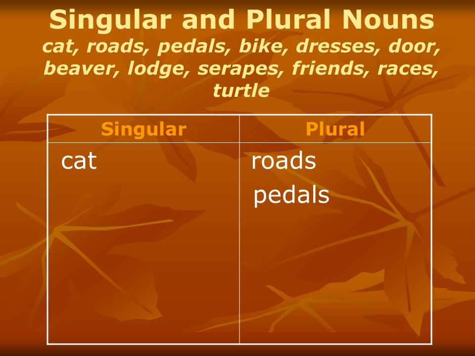 Singular and Plural Nouns cat, roads, pedals, bike, dresses, door, beaver, lodge, serapes, friends, races, turtle SingularPlural cat roads pedals