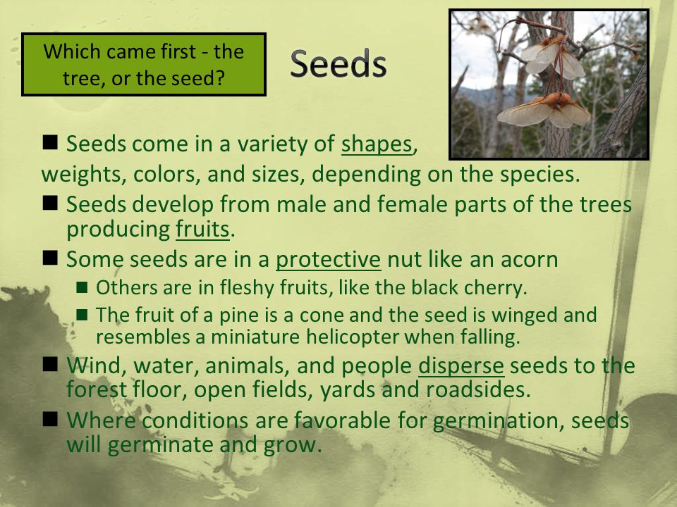 Seeds come in a variety of shapes, weights, colors, and sizes, depending on the species. Seeds develop from male and female parts of the trees produci