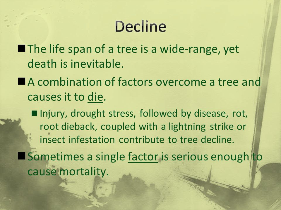 The life span of a tree is a wide-range, yet death is inevitable. A combination of factors overcome a tree and causes it to die. Injury, drought stres