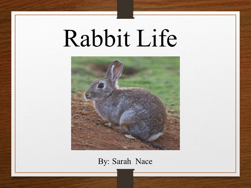 Rabbit Life By: Sarah Nace