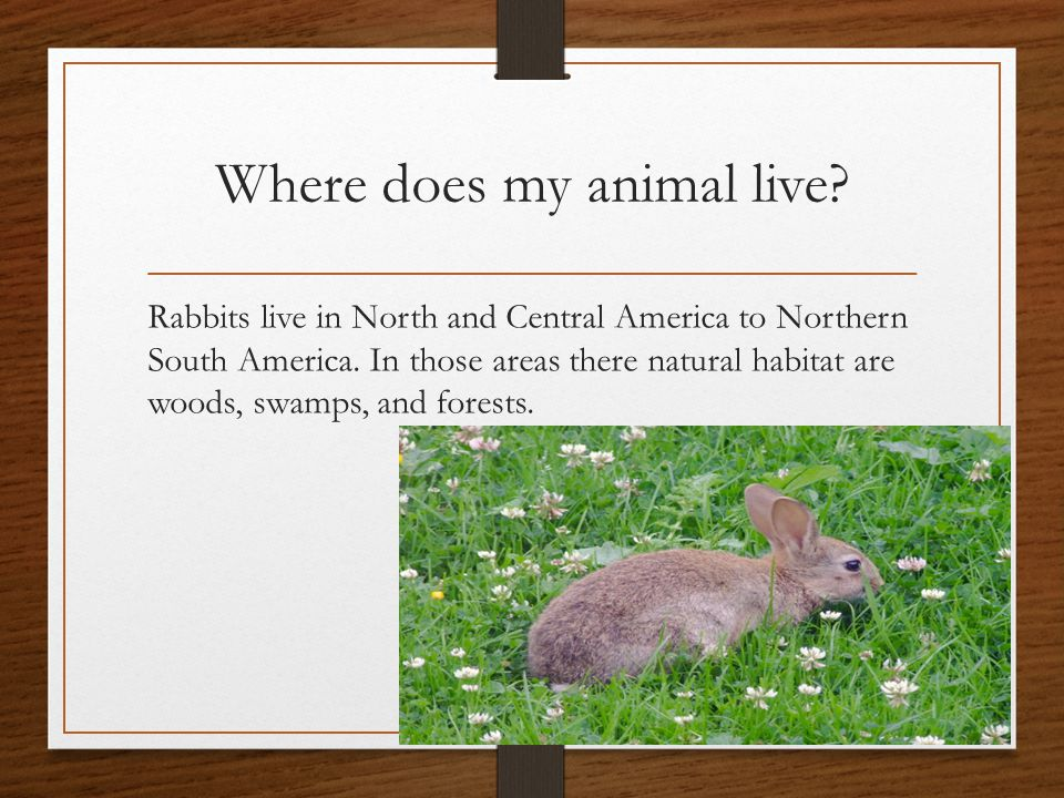 Where does my animal live. Rabbits live in North and Central America to Northern South America.