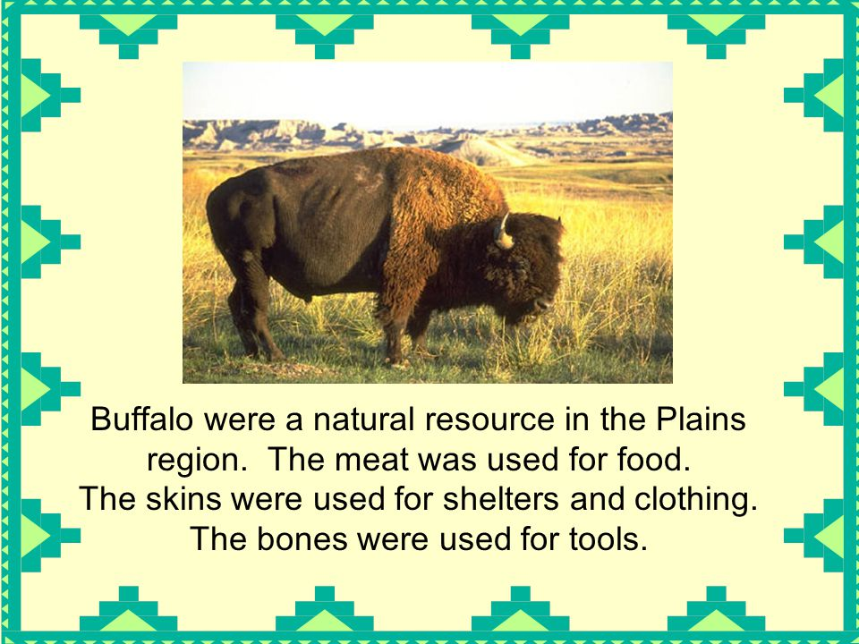 Buffalo were a natural resource in the Plains region.