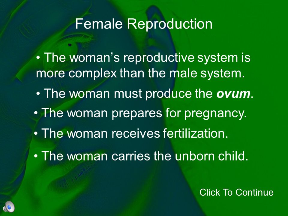 Female Reproduction The woman's reproductive system is more complex than the male system. Click To Continue The woman must produce the ovum. The woman