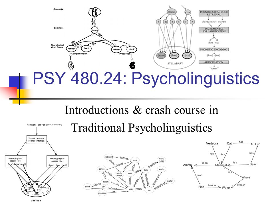 Psycholinguistics : A brief history 1900 102050607080902000 Pre-psycholinguistics: From the 1920's to the mid 1950's Psychology was dominated by behaviorism John B.