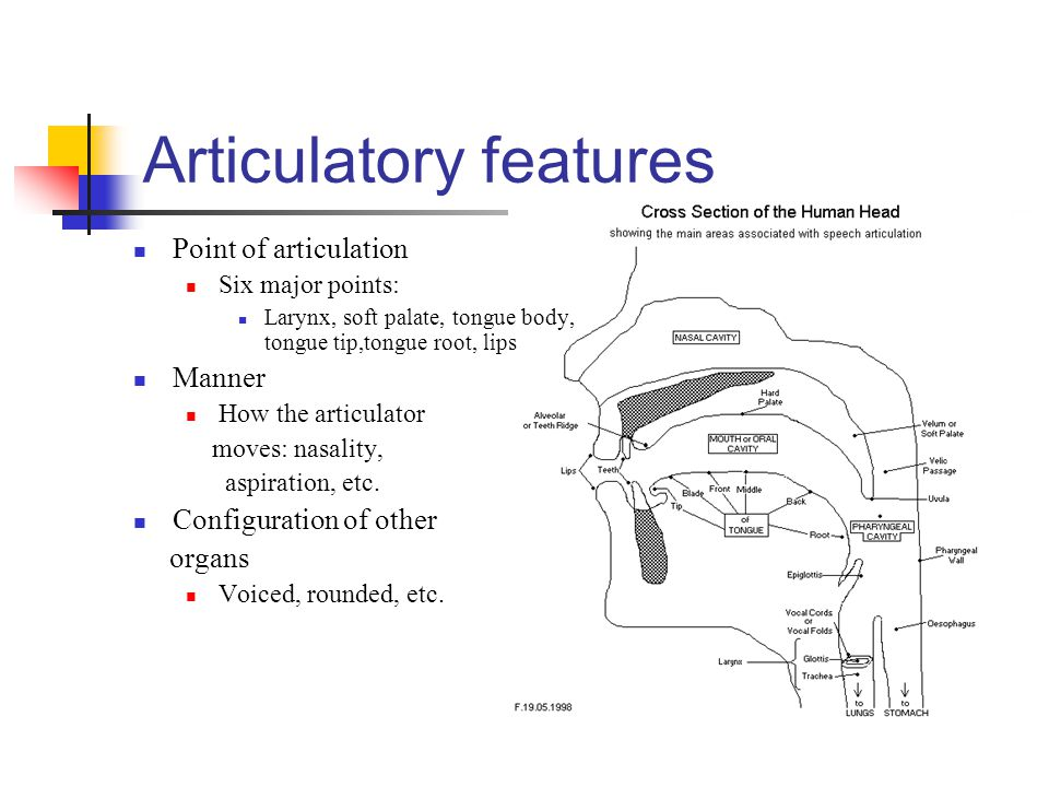 Articulatory features Point of articulation Six major points: Larynx, soft palate, tongue body, tongue tip,tongue root, lips Manner How the articulato