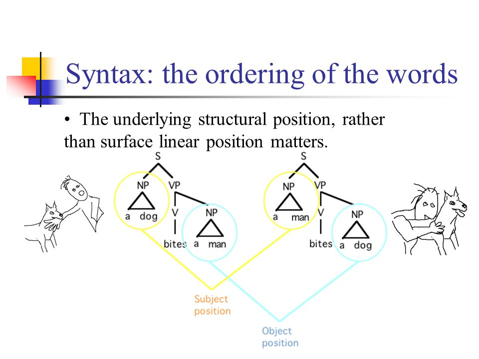 Syntax: the ordering of the words The underlying structural position, rather than surface linear position matters.