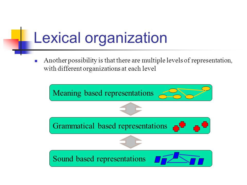 Lexical organization Another possibility is that there are multiple levels of representation, with different organizations at each level Sound based r