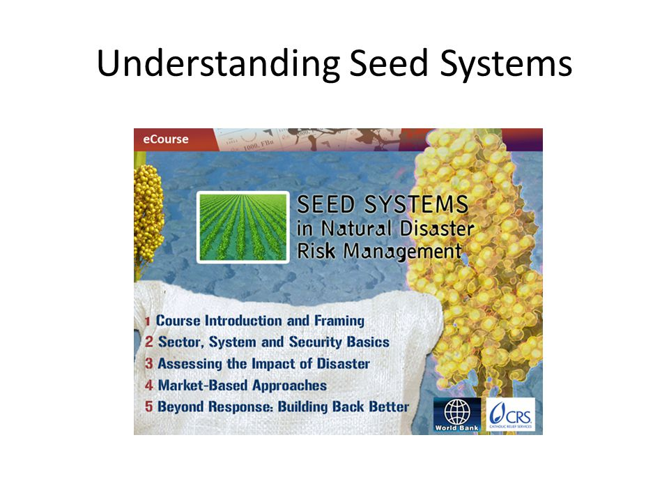 Understanding Seed Systems