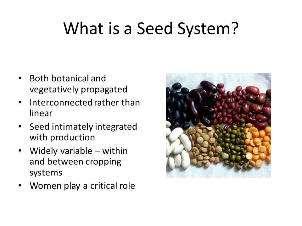 Seed Security Conceptual Framework ParameterDescription Availability Sufficient quantity of seed of appropriate crops available in proximity in time for planting Access People have adequate income or other resources to purchase or barter for seed Varietal Quality Seed is acceptable purity of adapted and preferred varieties Seed Quality Seed is of acceptable cleanliness and viability Resilience There are diverse seed sources to meet farmers' needs after shocks or stresses