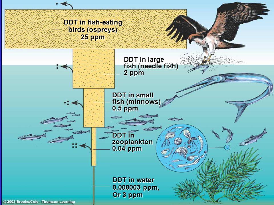 DDT in fish-eating birds (ospreys) 25 ppm DDT in large fish (needle fish) 2 ppm DDT in small fish (minnows) 0.5 ppm DDT in zooplankton 0.04 ppm DDT in
