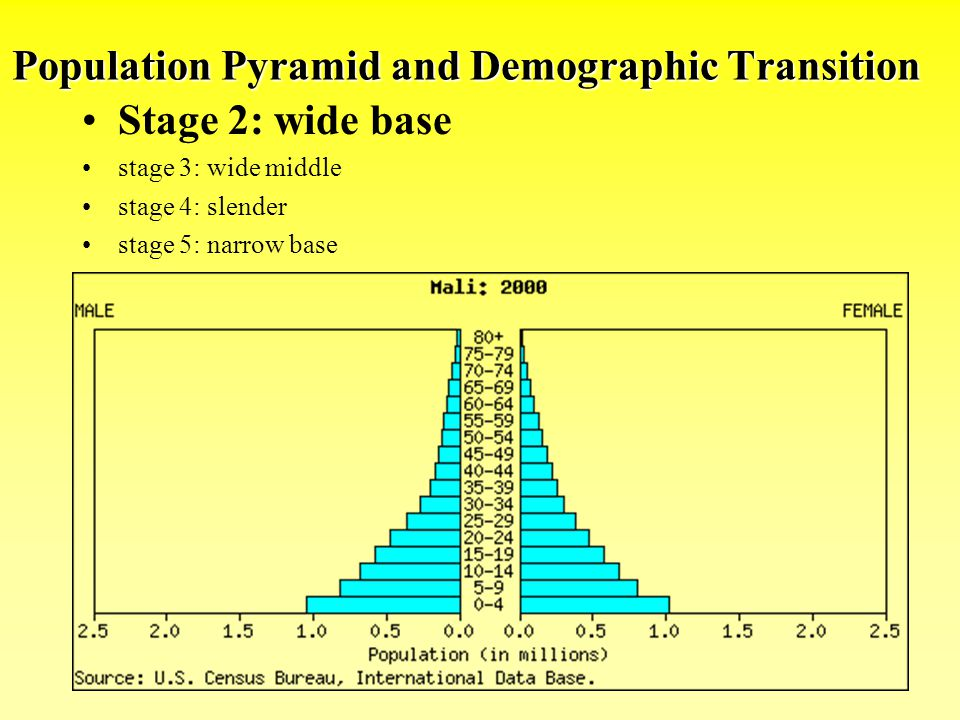 Population Pyramid and Demographic Transition Stage 2: wide base stage 3: wide middle stage 4: slender stage 5: narrow base